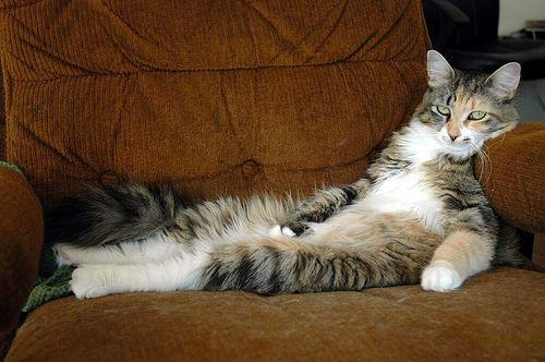 Lazy cat on sofa